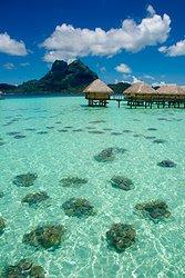 Bora Bora Over Water Bungalow