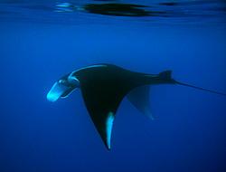 Bora Bora scuba diving