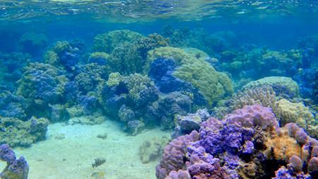 Bora Bora coral snorkeling