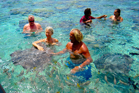 Christmas day with stingrays