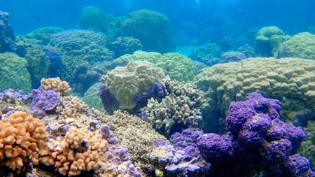 Christmas coral gardens