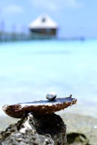Tahitian pearl farm