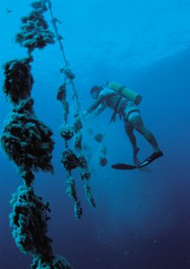 diving for pearl oysters