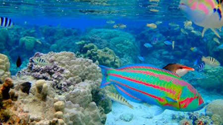 Colorful fish snorkeling Bora Bora