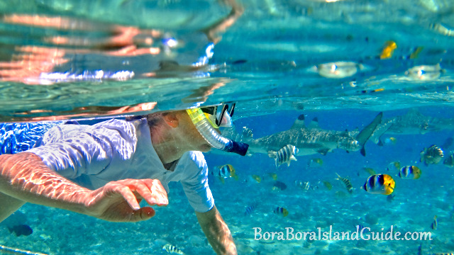 Best Snorkeling In Bora Bora