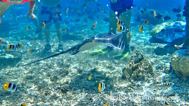 Snorkeling In Bora Bora Where To Find The Best Snorkeling Tahiti