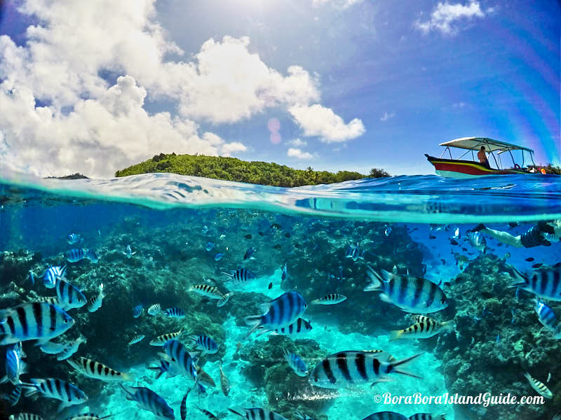 Bora Bora Lagoon Tours Best Tours Of The Lagoon