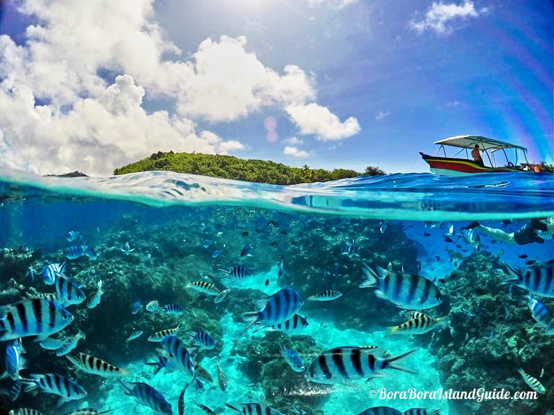 Day Tours In Bora Bora