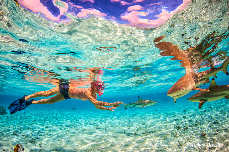 woman swimming with black tip reef sharks in Bora Bora