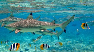 Choosing From Bora Bora Excursions