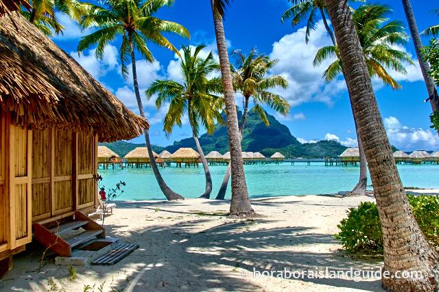 Getaway Among The Palm Trees